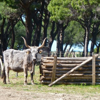 Home on the Range- Maremma