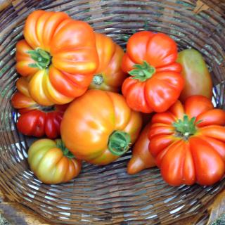 Simply Summer- Pomodori