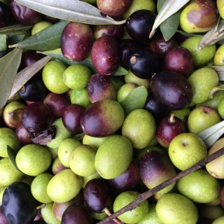 Real Extra Virgin Olive Oil- what is it?